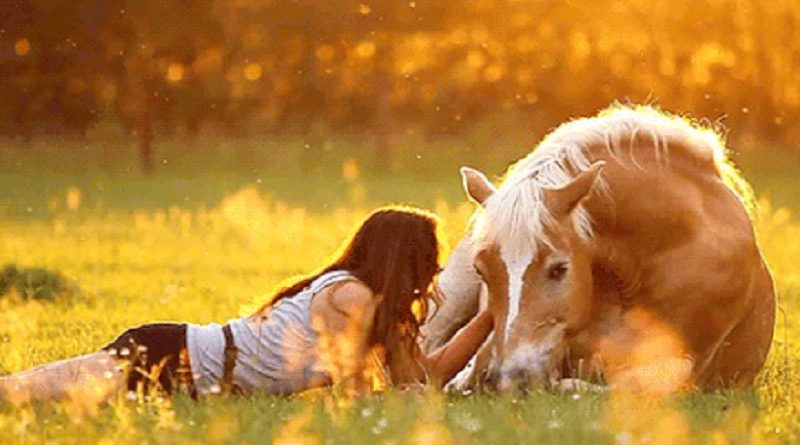 The Beauty of a Horse - Just Enjoy (VIDEO)